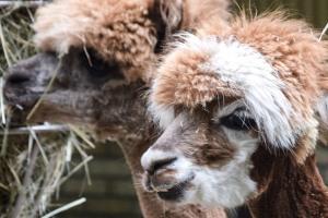 nowe-zoo-w-poznaniu-4.jpg