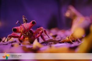 Chrząszcze w koszyku // 22.10.21, g. 10.00 // spektakl ONLINE // Finale 23. Biennale Sztuki dla Dziecka