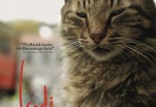 Bilety na: Kedi - sekretne życie kotów