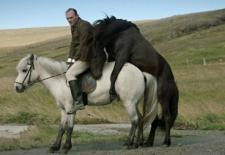 Bilety na: Pora na Skandynawię: O koniach i ludziach